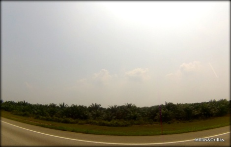 .Milläs&Orilläs. Vista de monocultivo de palma, en las carreteras de Malaysia.