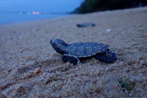 Fotografías tomadas por María Marcos, en Pantai Kemunting Melaka. Noviembre 2018.